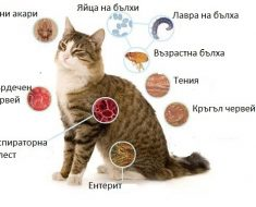 Паразити При Котките