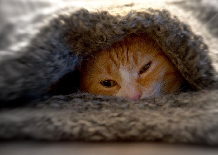 Депресирана котка, която се крие под одеало