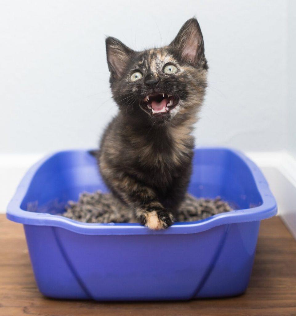 Малко коте в котешка тоалетна