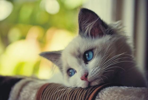 Коте, което се е облегнало на постелка и гледа тъжно