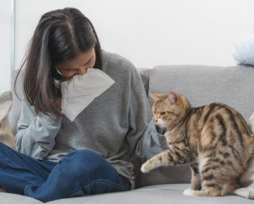 Aлергия към Kотки
