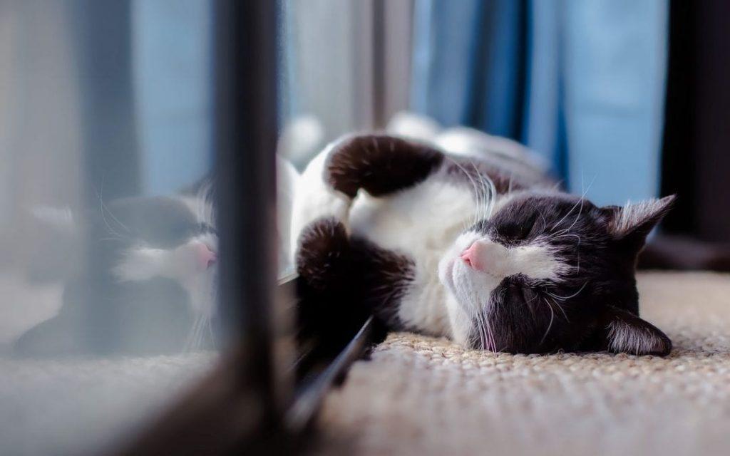 Черно-бяла котка, която се излежана, необезпокоявана на пода в апартамента ви.