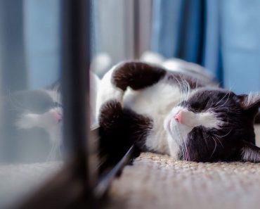 Как се Гледа Котка В Апартамент